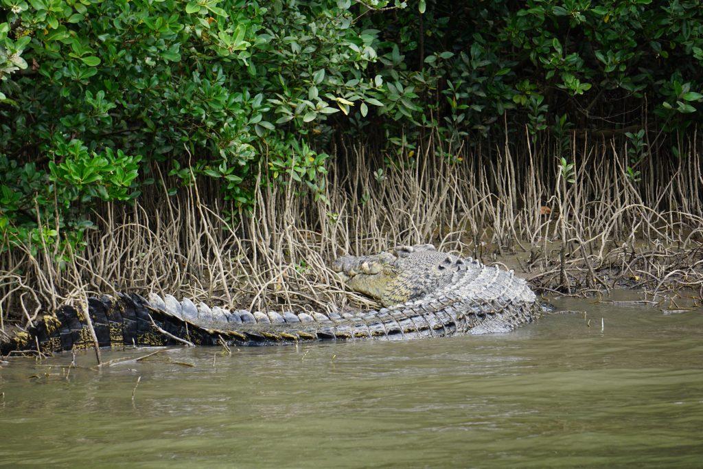 Australia's Deadliest , The Crocodile