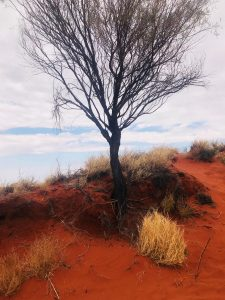 Australiam Outback